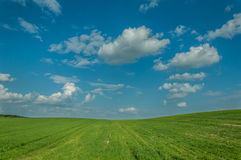 Agricultural landscape. the beautiful green field under the blue cloudy sky. shoots of grain crops Stock Image