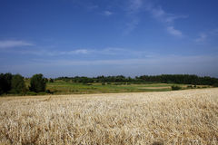 Agricultural landscape. Beautiful agricultural landscape in Poland Stock Photos