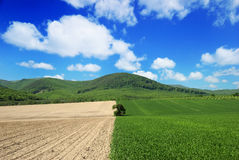 Agricultural landscape with blue sky Royalty Free Stock Images