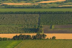 Fruit gardens. Green fields. Agricultural landscape. stock photo