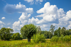 Agricultural landscape, clouds on the horizon. Royalty Free Stock Image