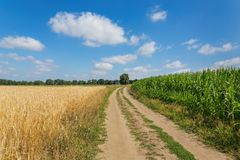 Agricultural landscape with country road corn field and cereal plants. Rural agricultural landscape with sand road corn field and cereal plants royalty free stock photography