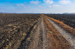 Agricultural landscape with earth road among fields Royalty Free Stock Image
