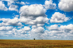 Agricultural landscape with field and blue sky Royalty Free Stock Image