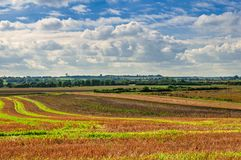 Agricultural landscape, field following harvest. Sweeping view of countryside after being harvested Royalty Free Stock Photography