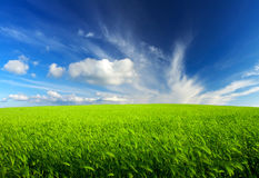 Agricultural landscape Royalty Free Stock Photography