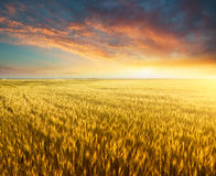 Agricultural landscape Royalty Free Stock Images