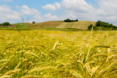 Agricultural landscape in France Royalty Free Stock Image