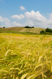 Agricultural landscape in France Royalty Free Stock Images