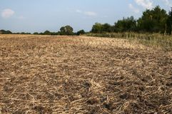 Plowed field closeup Stock Photo