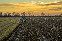 Agricultural landscape with fresh plowed field. Seasgulls, and suneset in the background Royalty Free Stock Photo