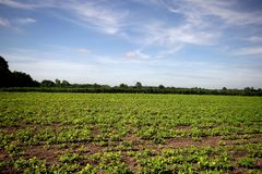Agricultural landscape. Royalty Free Stock Photo