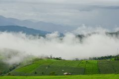 Agricultural landscape with green fields on hills at Pa Bong Pia. Ng village in Mae Cham, Chiangmai, Thailand Royalty Free Stock Images