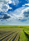 Agricultural landscape of growing fields at spring season Royalty Free Stock Photography