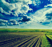 Agricultural landscape of growing fields at spring season Stock Image