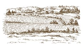 Agricultural landscape. Meadows and fields. stock illustration