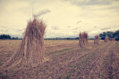 Agricultural landscape. Sheaves of wheat. Photo in vintage style. Agricultural landscape. Handmade grain harvest. Sheaves of wheat. Photo in vintage style Royalty Free Stock Photography