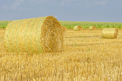 Agricultural landscape. Of hay bales in a golden field Stock Photo