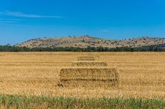 Agricultural landscape. Haystacks in a rural landscape Stock Photo