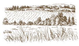 Agricultural landscape. Meadows or fields. vector illustration