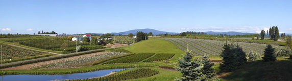 Agricultural Landscape Panorama, Oregon. Royalty Free Stock Images
