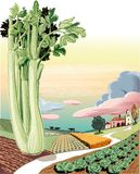 Agricultural landscape planted with celery. Agricultural landscape planted with celere in foreground royalty free illustration