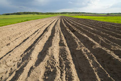 Agricultural landscape, plowed field. Royalty Free Stock Photo