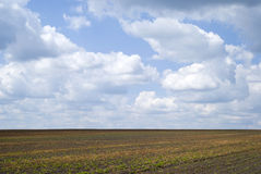 Agricultural landscape in Podolia region of Ukraine Royalty Free Stock Images