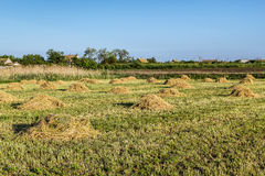 Agricultural landscape with ricks of hay Stock Image