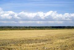 Agricultural landscape. Scenic view on agricultural landscape in Camargue region, France Stock Image