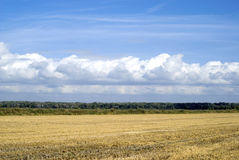 Agricultural landscape. Scenic view on agricultural landscape in Camargue region, France Royalty Free Stock Photo