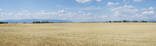 Agricultural landscape. Scenic view on agricultural landscape in Provence, France stock image