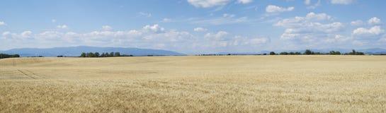Agricultural landscape Stock Image