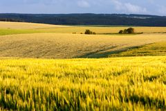 Agricultural Landscape of South Moravia. Grain fields of South Moravia in summer evening, Tišnov, South Moravian Region, Czech Republic Stock Photo