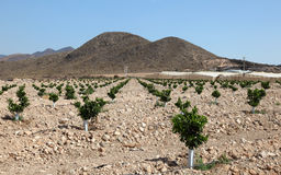 Agricultural landscape in southern Spain Stock Photos
