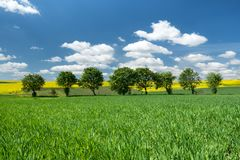Agricultural landscape at the summer time stock images