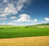 Agricultural landscape in the summer time Royalty Free Stock Images