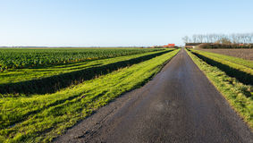 Agricultural landscape on a sunny day in autumn Stock Photo