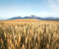 Agricultural landscape in the Tatry mountain, Slovakia Stock Image