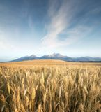 Agricultural landscape in the Tatry mountain, Slovakia Stock Photography