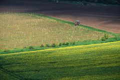 Agricultural landscape with tractor in South Moravia at sunset, Stock Photos