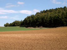 Agricultural  landscape with trees and bright blue sky Stock Photography
