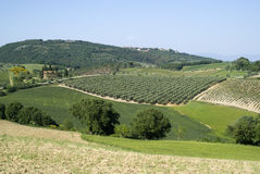 Agricultural landscape in Tuscany Stock Images