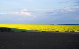Agricultural landscape in Ukraine Stock Photo
