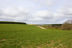 Agricultural landscape with wheat crop Stock Image