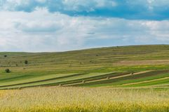 Agricultural landscape,  wheat field in the foreground,. Haystacks, blue cloudy sky Stock Images