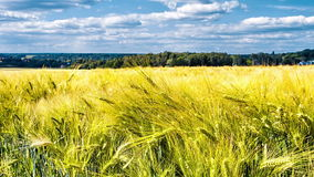 Agricultural landscape with wheat field. Timelapse