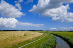 Agricultural landscape with wheat and a stream Stock Photos