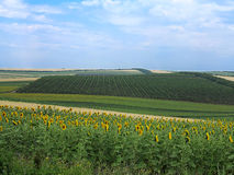 Agricultural landscape - wheatfield, sunflower and gardens Royalty Free Stock Photo