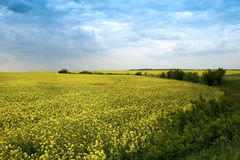 Agricultural landscape - yellow rape flowers Stock Photos